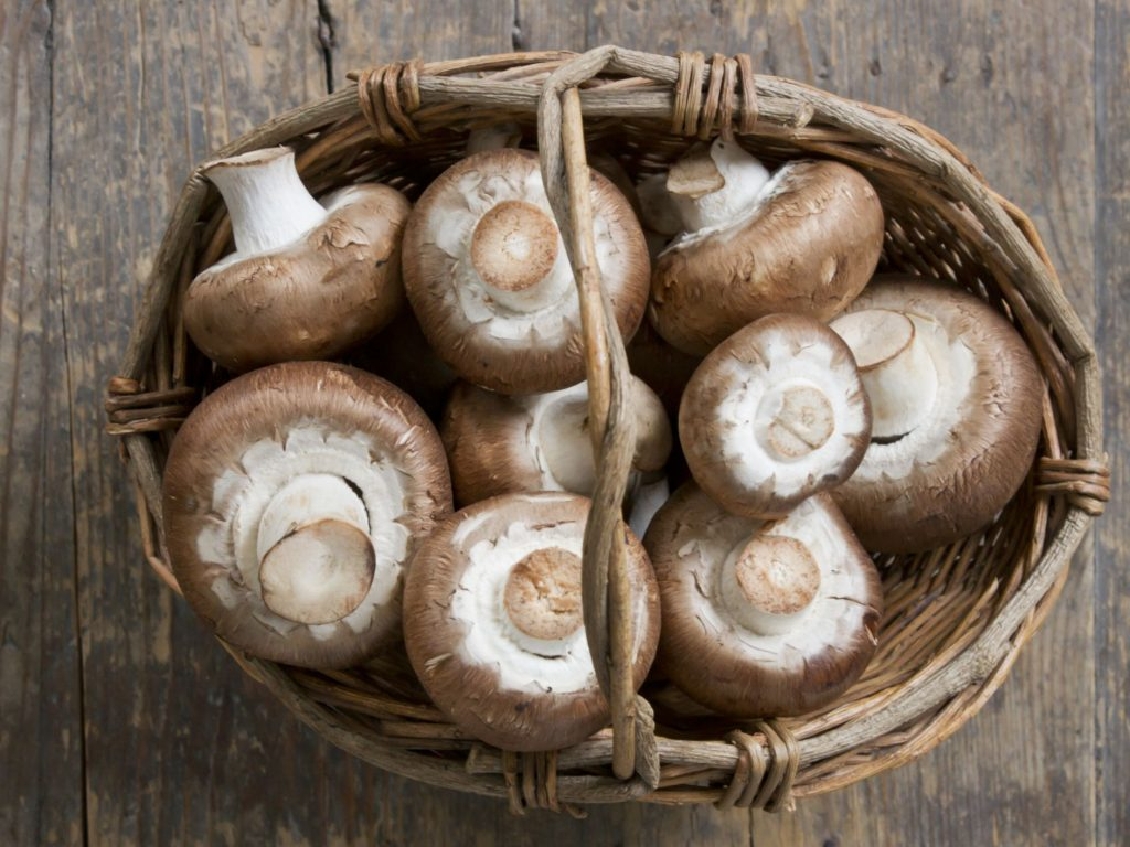 Buy Mushroom Online